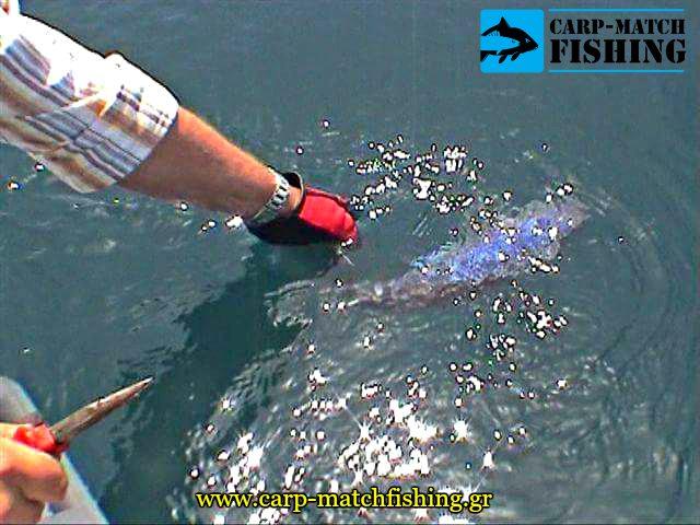 catch and release boat synagrida carpmatchfishing