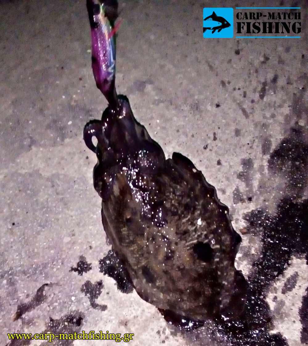 eging soupia cuttlefish purple yamashita jig carpmatchfishing