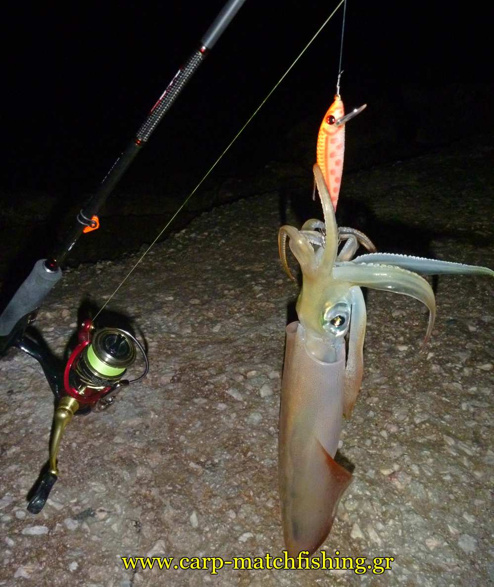 eging squid minnow or carpmatchfishing