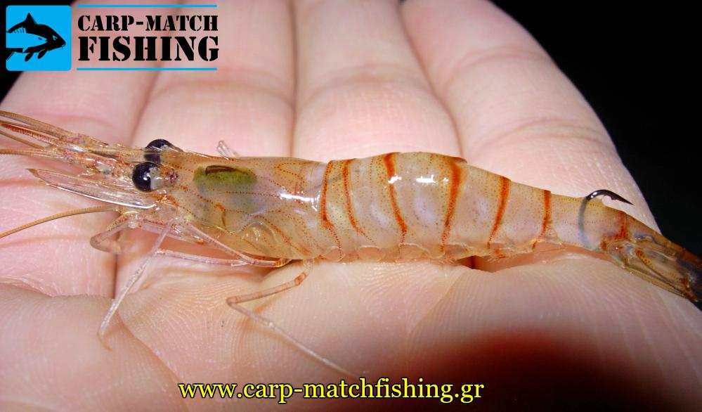 dolomeni zontani garida matchfishing psarema eggleziko carpmatchfishing
