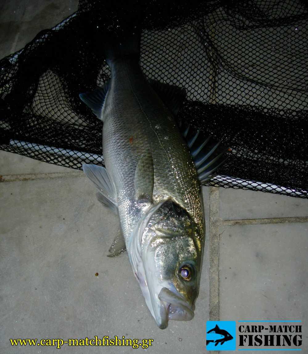 lavraki matchfishing garida apoxi carpmatchfishing