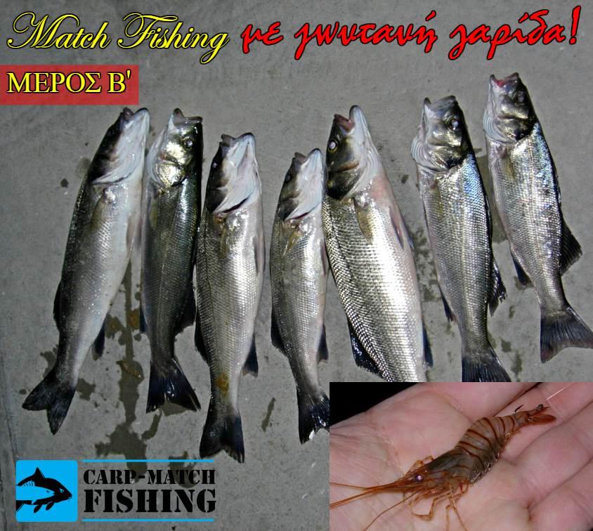 lavrakia me matchfishing doloma zontani garida eggleziko carpmatchfishing