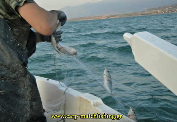 limni-polifitou-dixtya--2-carpmatchfishing