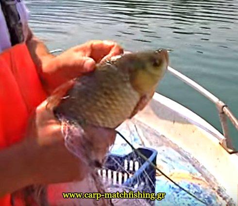 limni-polifitou-dixtya-petalouda-carpmatchfishing