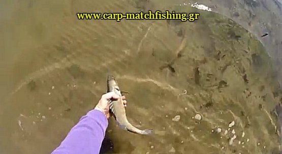 lavraki-catch-and-release-carpmatchfishing-spinning