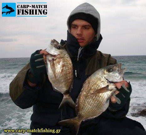 sargoi terabite carpmatchfishing