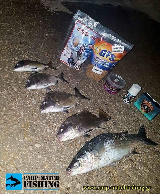 terabite angry fish gfs psaria kefaloi sargoi carpmatchfishing malagres