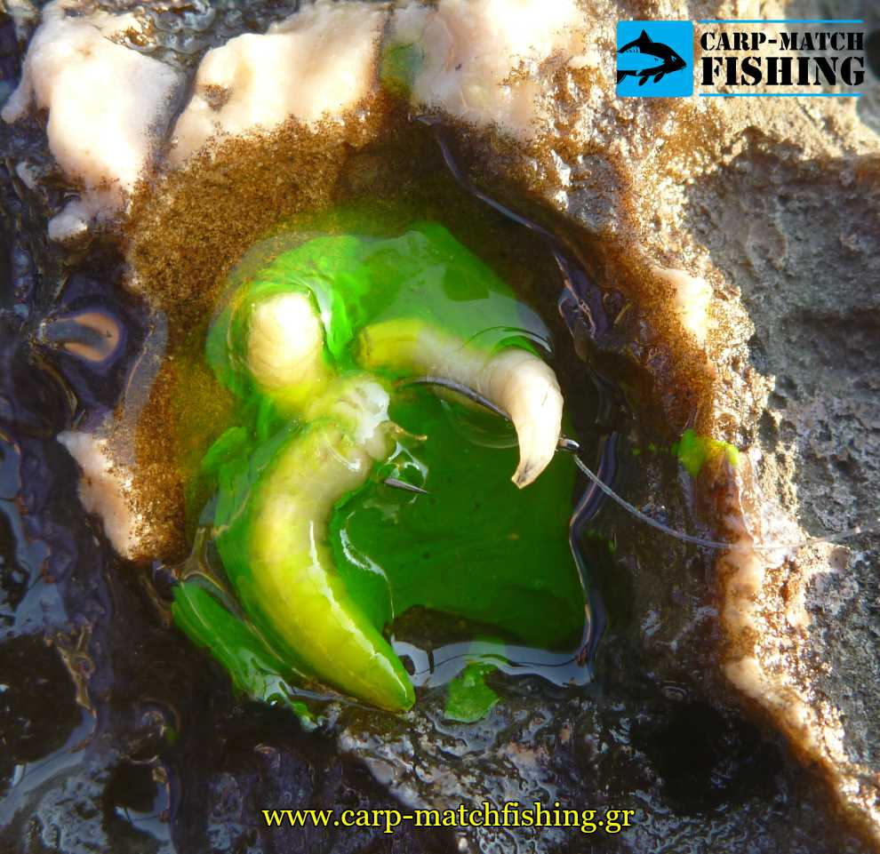 terabite bigattino eggleziko match psarema carpmatchfishing