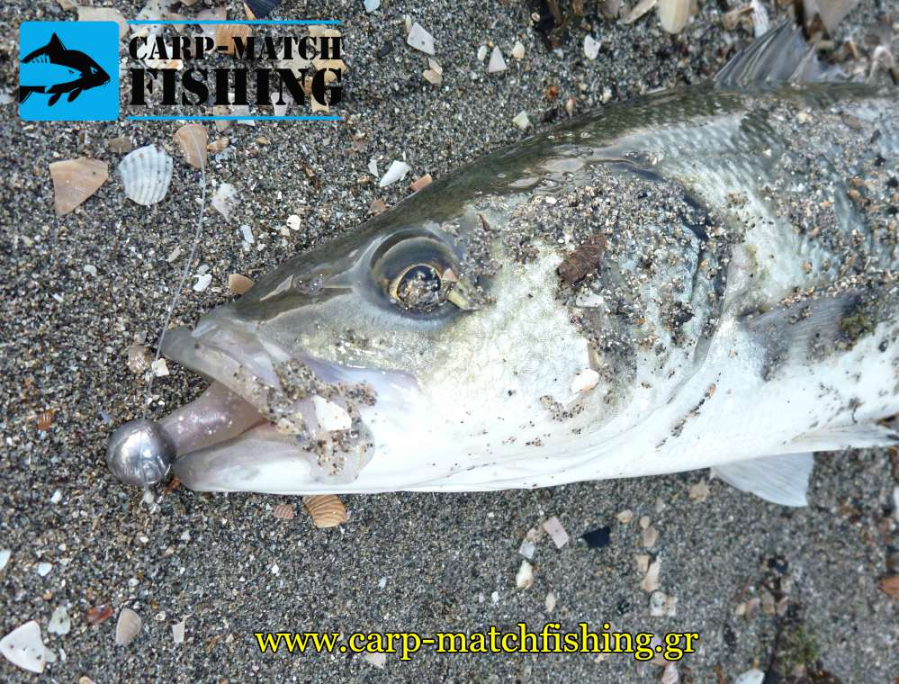 sea bass lavraki silikoni spinning viper pro carpmatchfishing