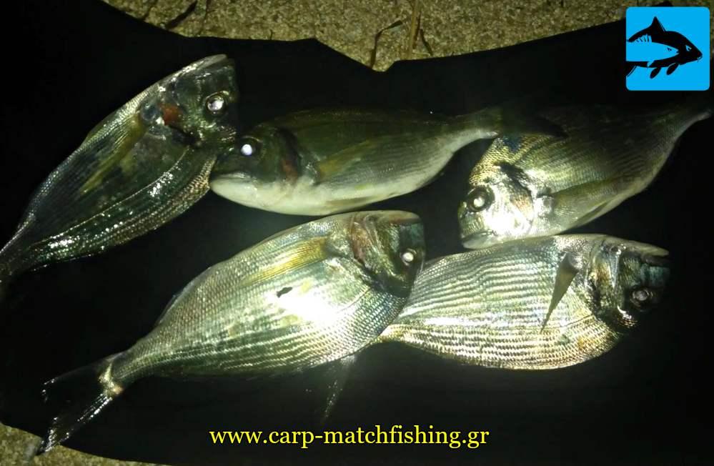 tsipoures psareytikes eksormiseis carpmatchfishing