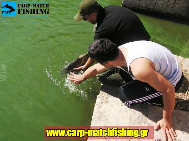 catch and release carpmatchfishing