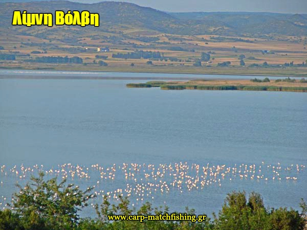 limni-volvi-flamingo-carpmatchfishing