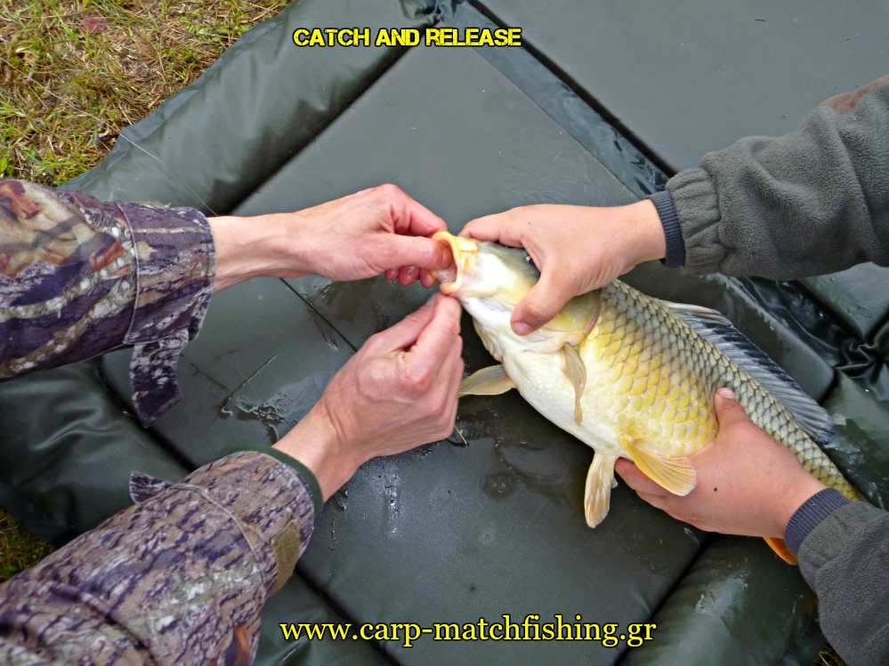 carp-safety-unhooking-mat-catch-and-release-carpmatchfishing