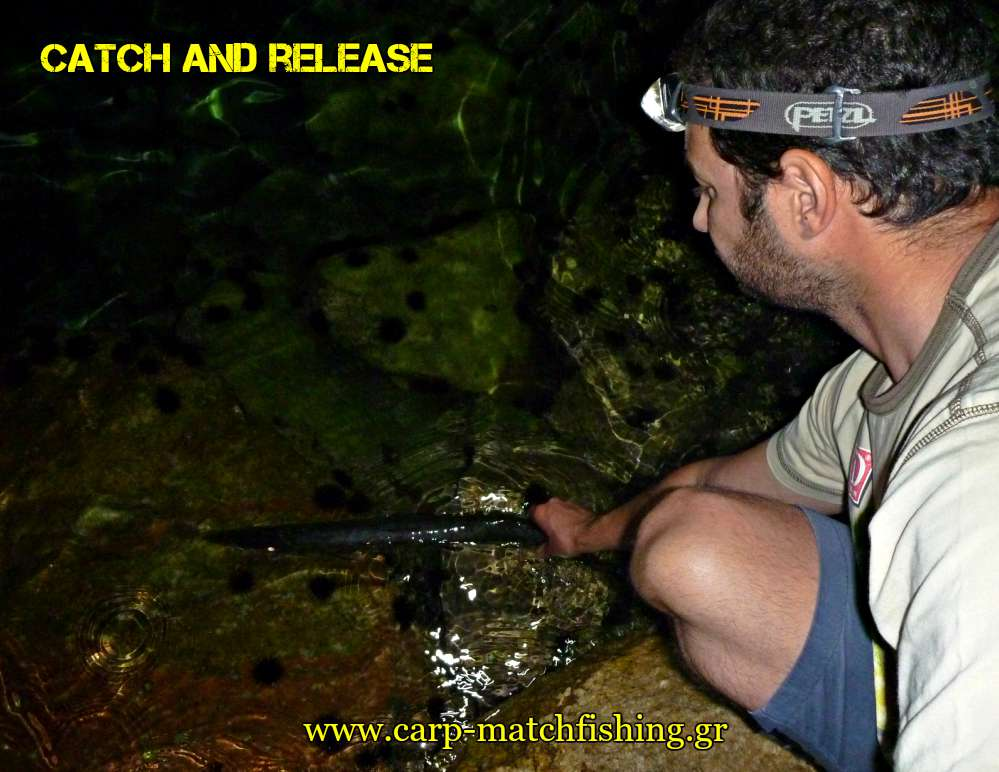 catch-and-release-loutsos-lrf-carpmatchfishing