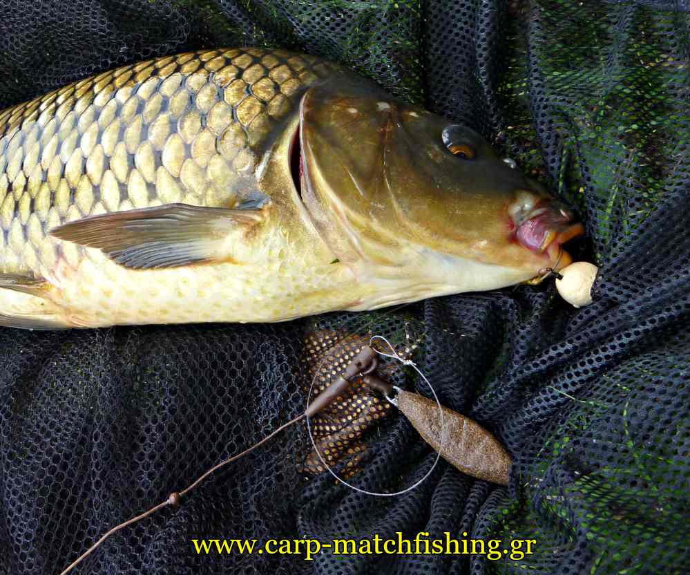 shocker-lead-system-with-safety-lead-clip-carp-carpmatchfishing