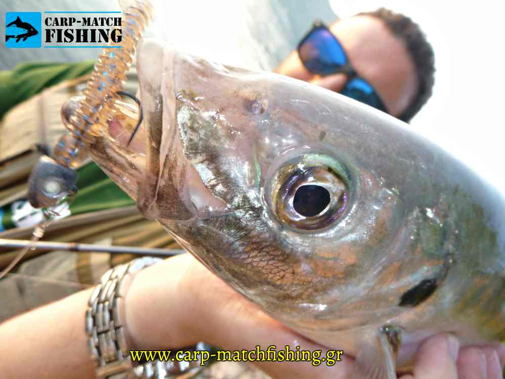 kokkali silikoni mouth lworm shad rf carpmatch