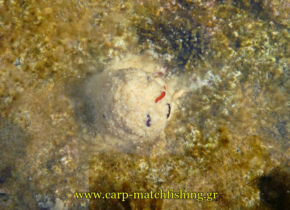 angry-fish-groundbait-malagra-lavrakia-matchfishing-carpmatchfishing