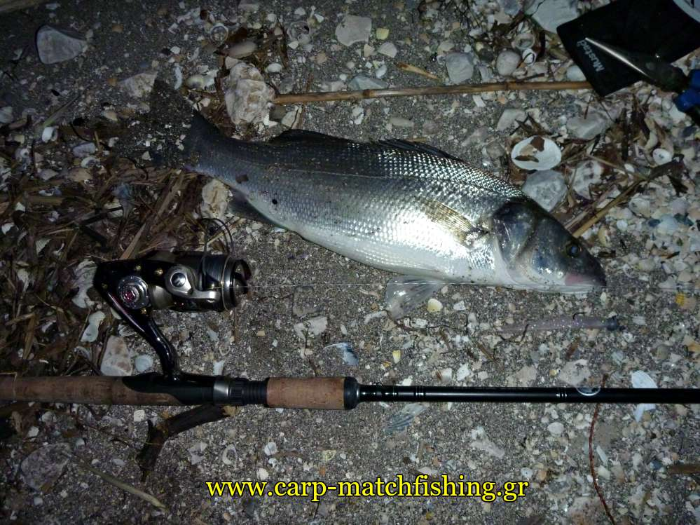 spinning-sea-bass-with-braid-nests-carpmatchfishing