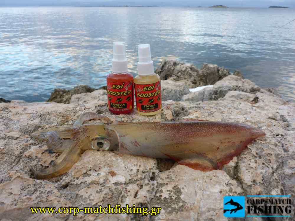 egi booster eging rocks squid carpmatchfishing