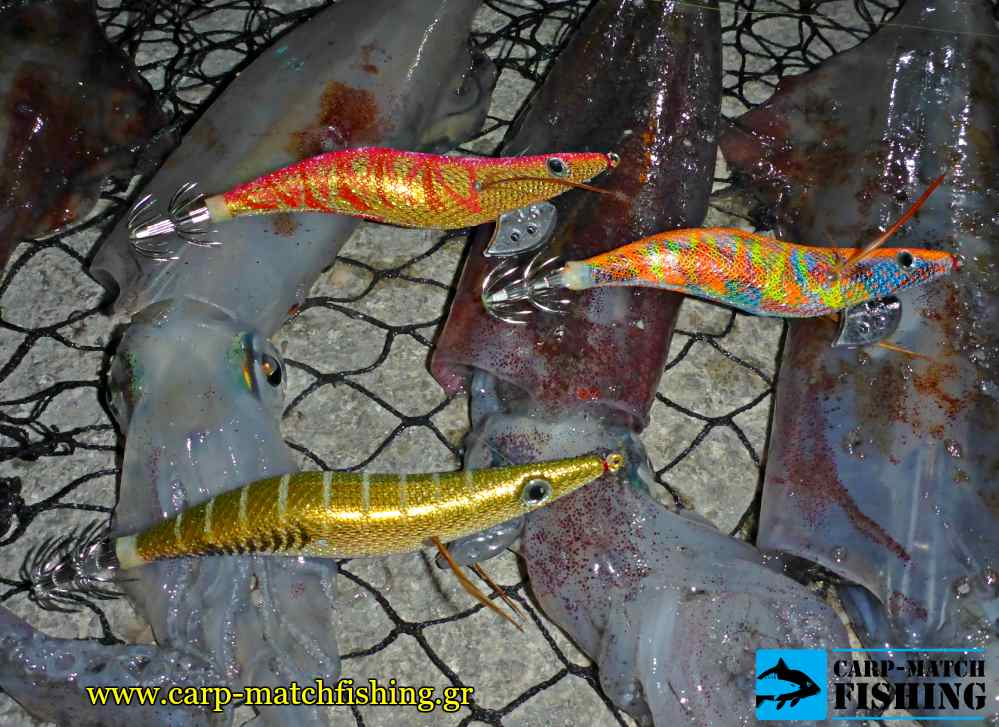 vega rattle jigs squids eging carpmatchfishing