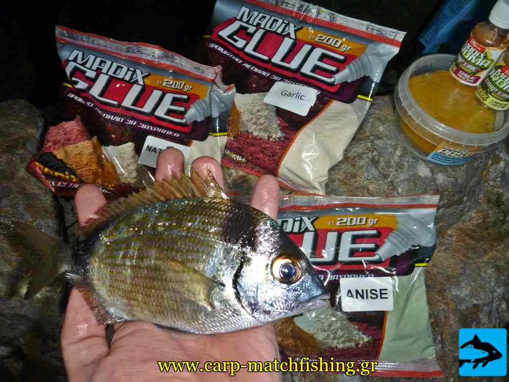 madix glue sargos carpmatchfishing