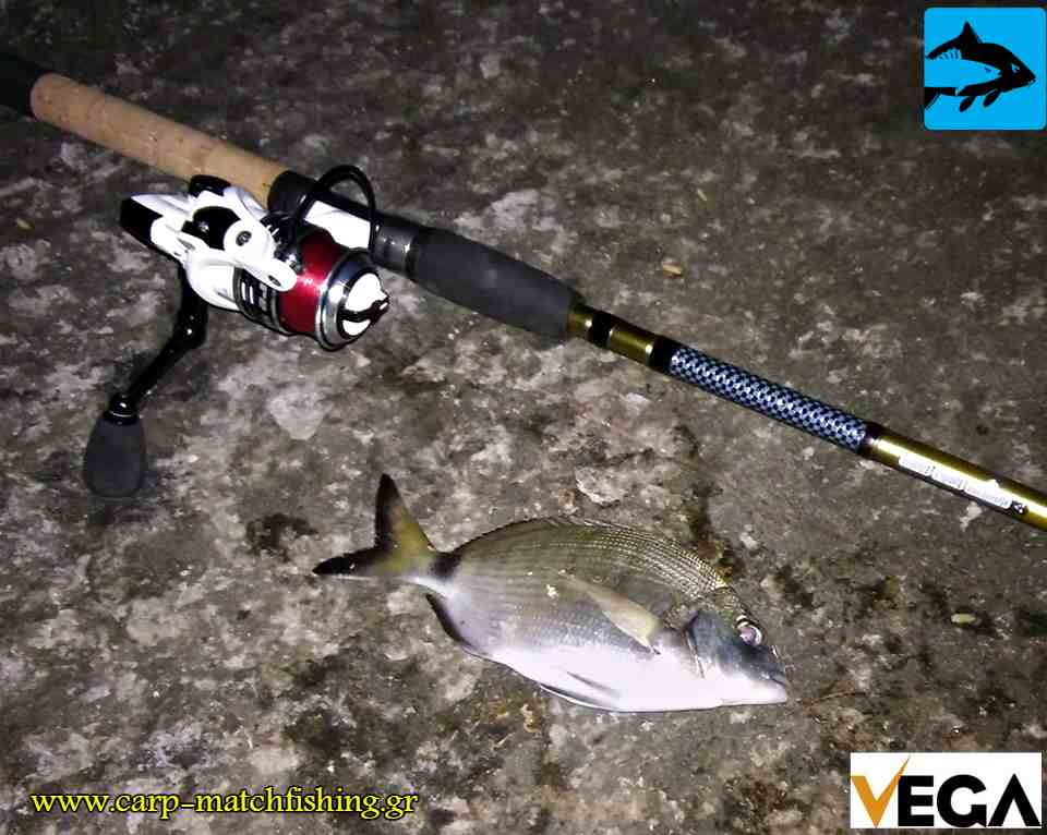sargos native match vega rod carpmatchfishing