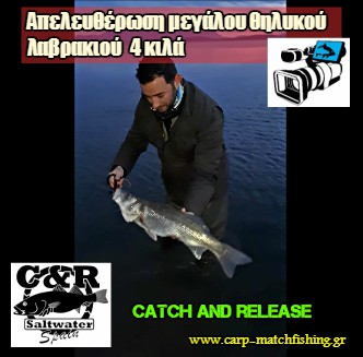 catch and release apeleutherosi lavraki 4 kila carpmatchfishing